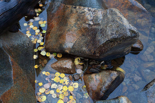 Photograph - Leaves In A Stream by Jim Garrison