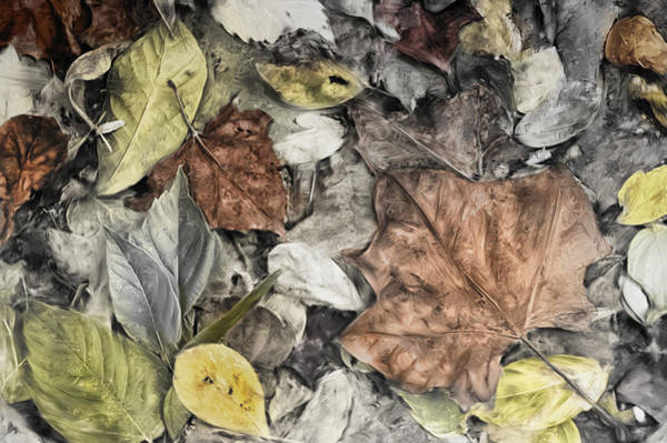 Photograph - Leaves by Mick Burkey