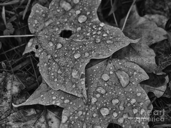 Photograph - Leaves Of Autumn by Deborah Benoit