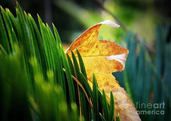 Photograph - Leaves Of Grass by Ellen Cotton