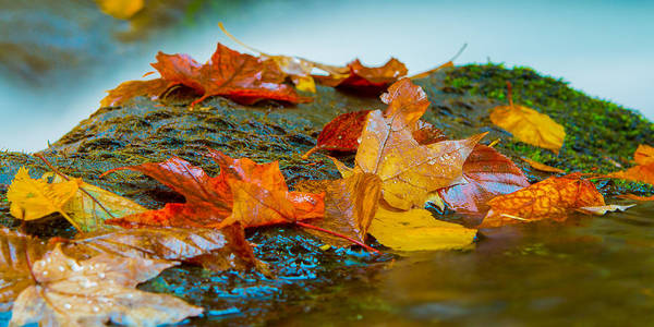 Photograph - Leaves Of Joy by Dave Hahn