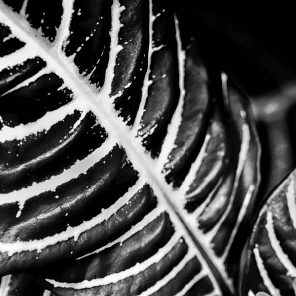 Photograph - Leaves Of Life by Louis Dallara