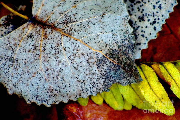 Photograph - Leaves Of Oak Openings Preserve by Michael Arend