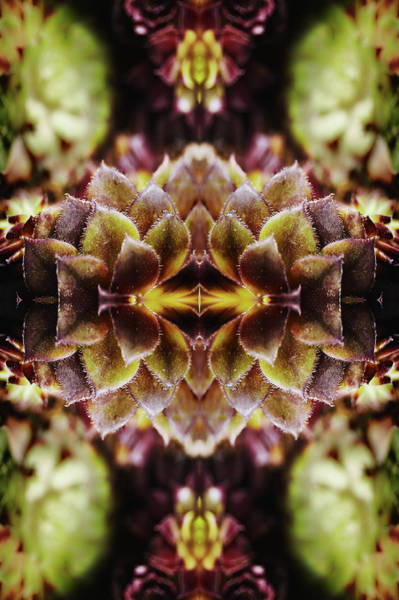 Ornate Photograph - Leaves Of Succulent Plant by Silvia Otte