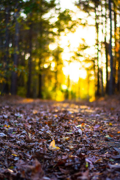 Photograph - Leaves On A Forest Trail by Parker Cunningham