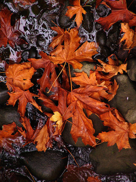 Vancouver Mixed Media - Leaves On A Pond by Janet Ashworth