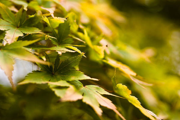 Wall Art - Photograph - Leaves by Samantha Eisenhauer