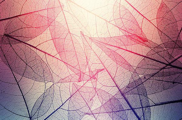 Leaves Skeleton Background Art Print by Andrey Danilovich