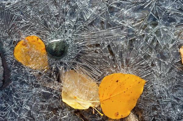 Icy Leaves Wall Art - Photograph - Leaves Trapped In Ice by David Nunuk/science Photo Library