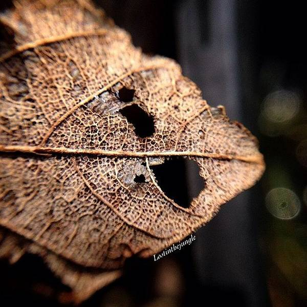 Wall Art - Photograph - #leavesonlyleaves #lovelydeadcrap by Marielle Coleman