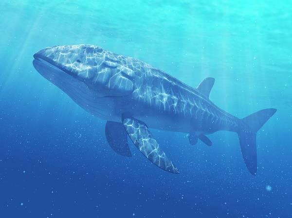 Full Length Digital Art - Leedsichthys Prehistoric Fish, Artwork by Sciepro