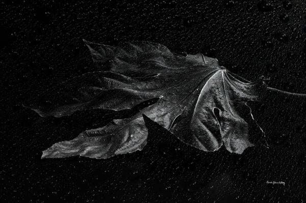 Photograph - Left Alone by Randi Grace Nilsberg