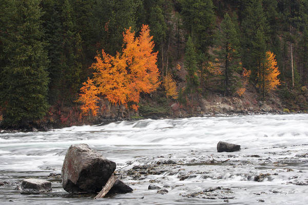 Photograph - Lehardy Rapids by Gerry Sibell