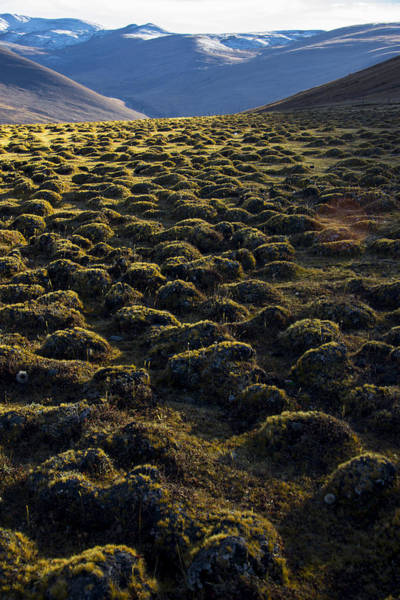Mossy Photograph - Lemmings by Aaron Bedell