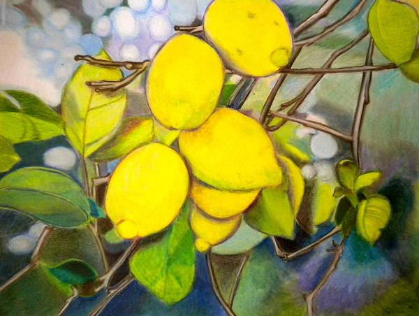 Colored Pencil Drawings Painting - Lemons by Debi Starr