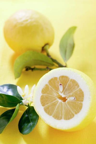 Wall Art - Photograph - Lemons With Leaves And Blossom by Foodcollection