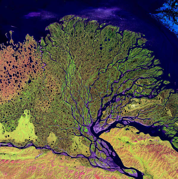 Photograph - Lena Delta by USGS Landsat