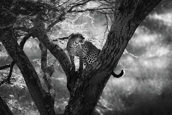 Wall Art - Photograph - Leopard by Bjorn Persson