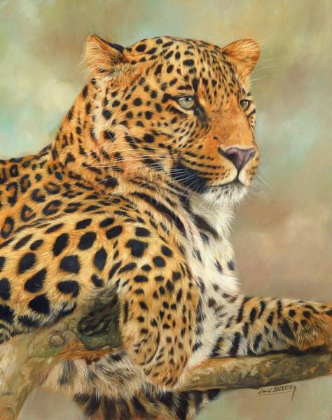 Big Cat Wall Art - Painting - Leopard by David Stribbling