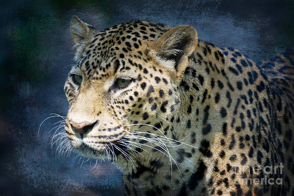 Photograph - Leopard Whiskers by Chris Scroggins