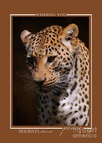 Photograph - Leopard Wildlife Christmas Cards by Jai Johnson