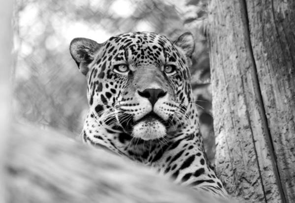 Beauty Spot Photograph - Leopards Don't Change Their Spots by Brad Scott
