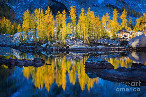 Conifer Photograph - Leprechaun Tamaracks by Inge Johnsson