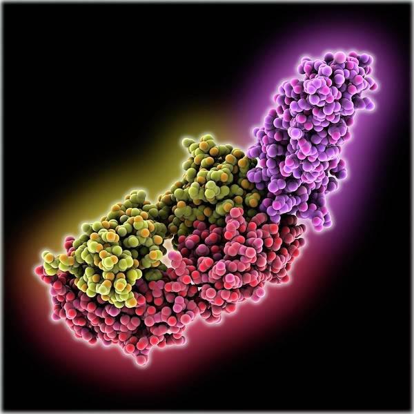 Antibody Wall Art - Photograph - Leptin Receptor Molecule by Laguna Design