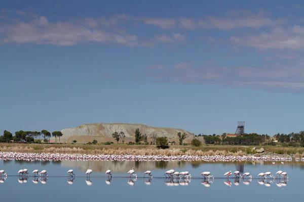 Wading Photograph - Lesser Flamingos Feeding And Wading In by Hein Von Horsten