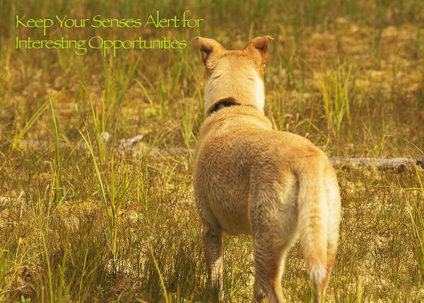 Photograph - Lessons From Nature 3 - Keep Your Senses Alert by Belinda Greb