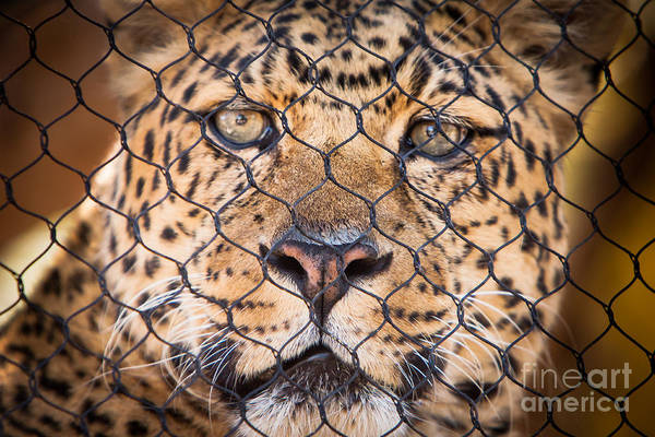 Art Print featuring the photograph Let Me Out by John Wadleigh