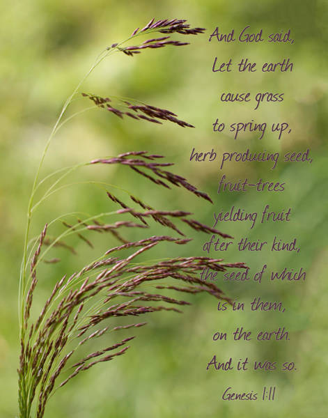 Photograph - Let The Earth Bring Forth Grass Genesis by Denise Beverly