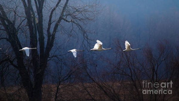 Photograph - Let Your Spirit Fly by Rima Biswas