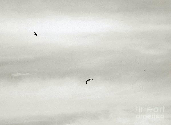 Photograph - Let Your Spirit Soar by Robyn King