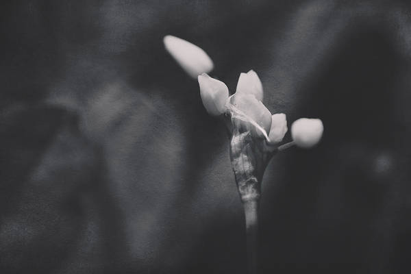Photograph - Letting Go Is The Hardest Part by Laurie Search