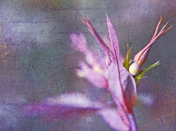 Language Photograph - Lettres D'amour by Theresa Tahara