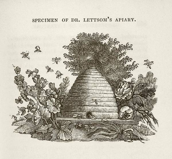 Bee Hive Photograph - Lettsom's Apiary by Middle Temple Library