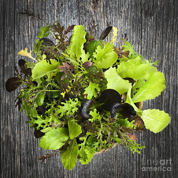 Leafy Greens Photograph - Lettuce Seedlings by Elena Elisseeva