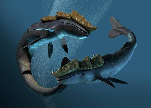 Prehistory Photograph - Leviathan Sea Monsters by Victor Habbick Visions/science Photo Library