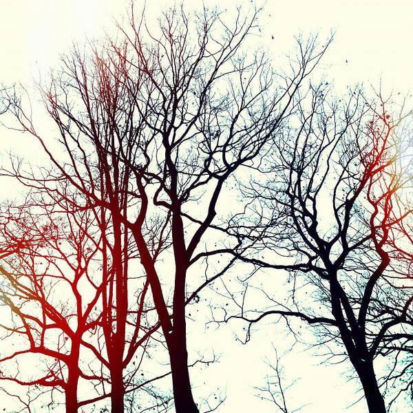Photograph - L'hiver by Natasha Marco