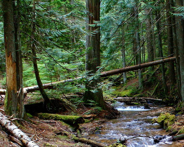 Photograph - Liberty Creek 2014 by Ben Upham III
