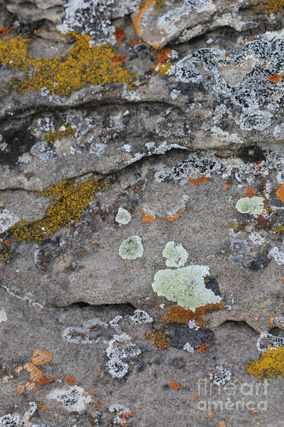 Photograph - Lichen #5 by Donna L Munro
