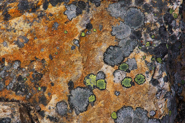 Photograph - Lichen Abstract by Stuart Litoff