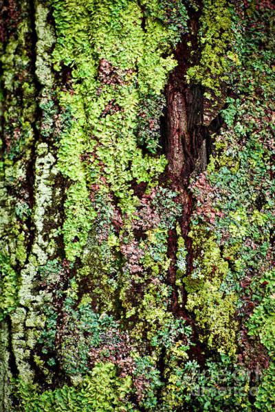 Lichens Photograph - Lichen by Elena Elisseeva