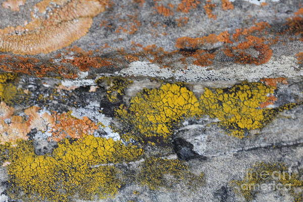 Photograph - Lichen On Rock #2 by Donna L Munro