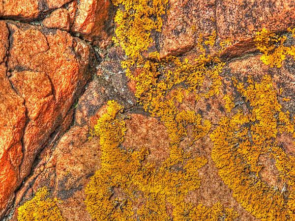 Orange Lichen Photograph - Lichens On The Shoreline Rocks 1 by Gill Billington