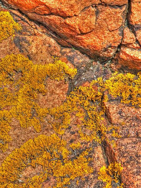 Orange Lichen Photograph - Lichens On The Shoreline Rocks 2 by Gill Billington