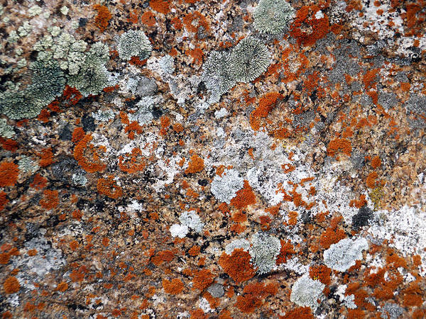Photograph - Lichens by Tarey Potter