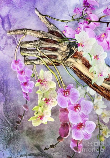 Orchid Digital Art - Life And Death by Michael Volpicelli