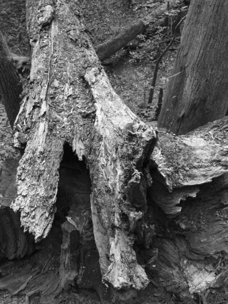 Photograph - Life And Death On The Forest Floor Greyscale by MM Anderson